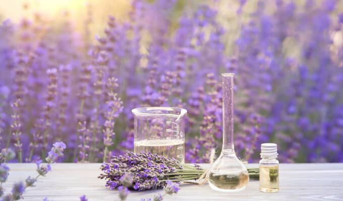Essential lavender oil | herbs to Support Your Sobriety Journey  | The Alchemist Kitchen