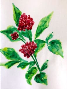 Painting of red ginseng flowers