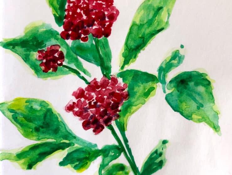 3.Ginseng | Wisdom Blog | Alchemy | The Alchemists Kitchen