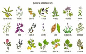 Herbs to use for beauty
