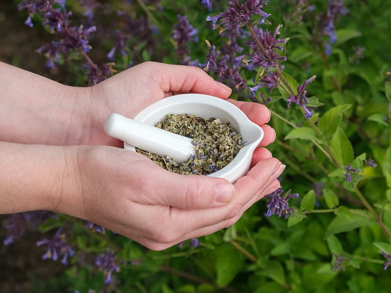 Anise Hyssop Herb Medicinal Preparation