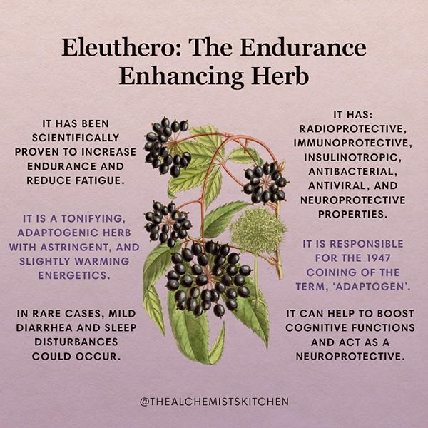 Eleuthero Herb Infographic