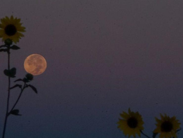 Full_Moon_With_Flower.Jpg