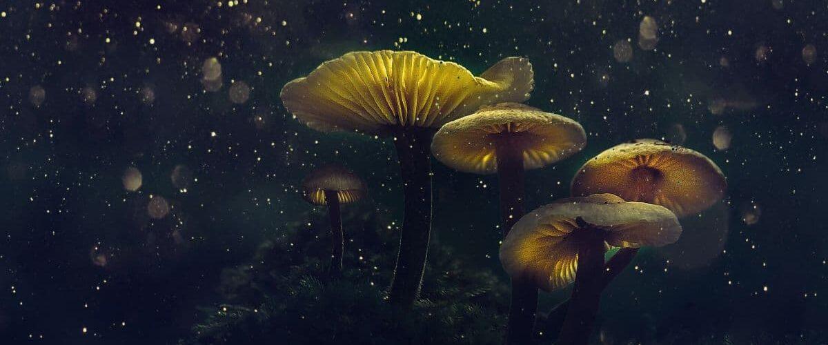 Mushroom_Nighttime.JPG