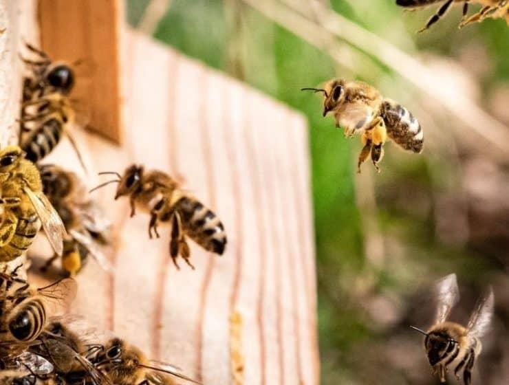 Bees_Hive.JPG