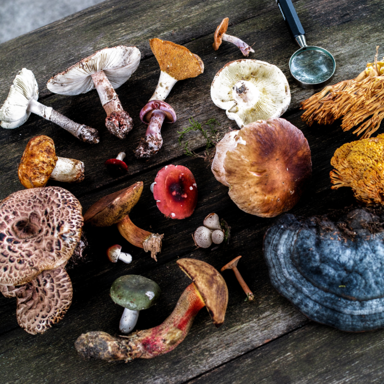 Top 10 Places to Forage for Mushrooms