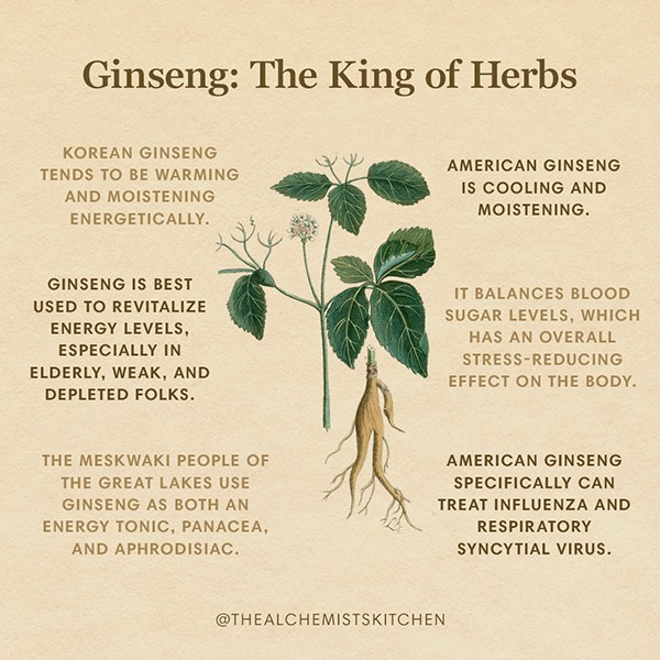 Ginseng Herb Infographic