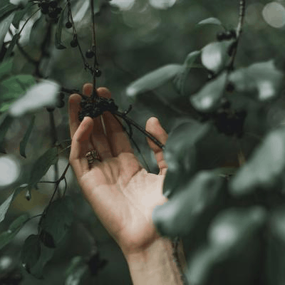 Herbs Guided by the Moon: An Interview with Herbal Moon Apothecary Co-founder Megan Gurule