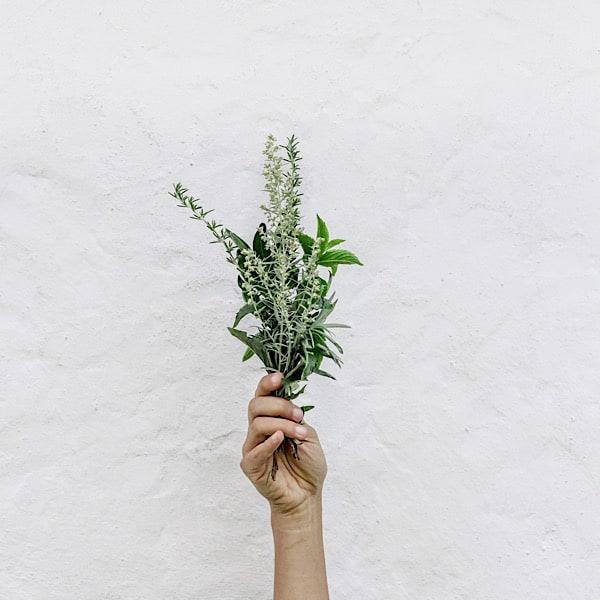 Four Thanksgiving Herbs