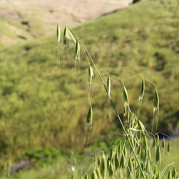 herbs for self-love