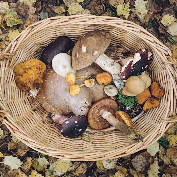 Mushrooms for Immunity