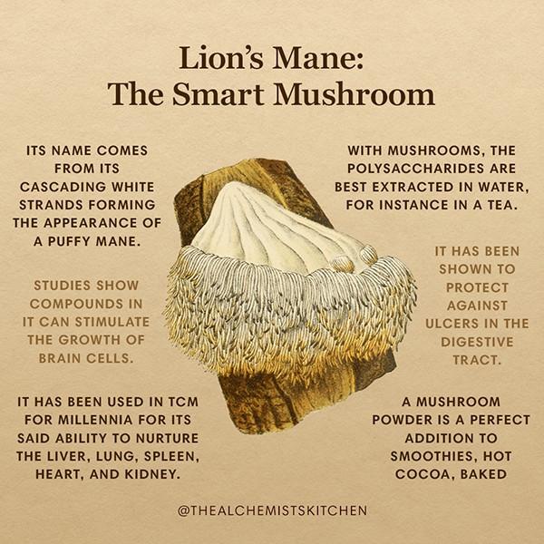 Lion's Mane Mushroom Infographic
