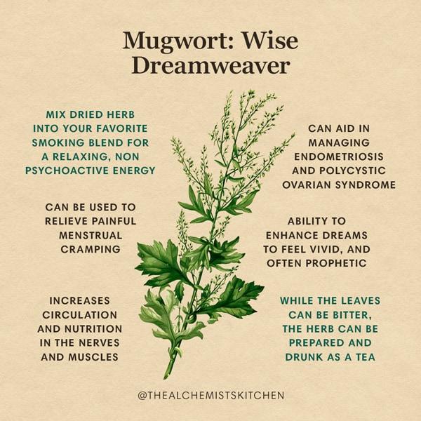 Mugwort Herb Benefits Infographic