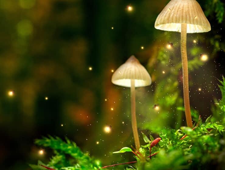 Psychedelic Ceremony Psilocybin Mushroom Magic