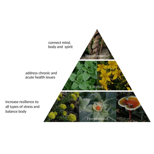 The Alchemist's Kitchen's Approach To Herbalism