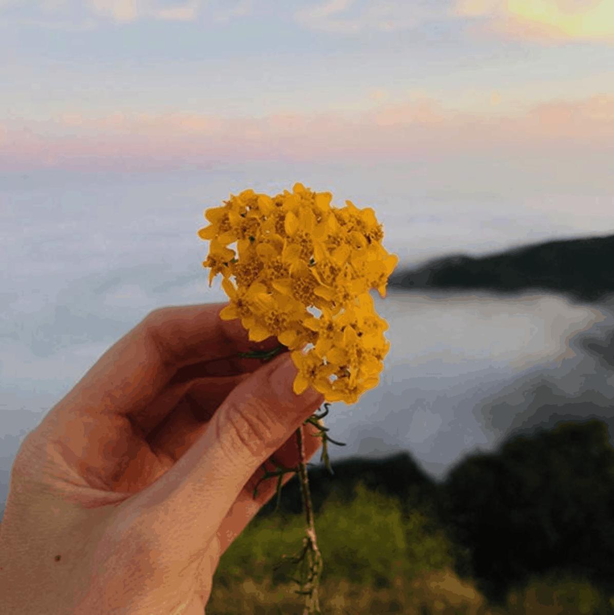 The Astrology of June 2018: Balancing Head and Heart
