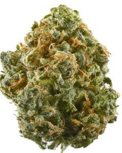 Jungle Spice Strain (high in CBG)