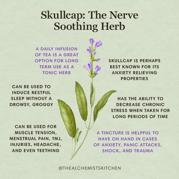 Skullcap Herb Benefits Infographic
