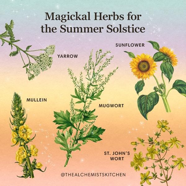 Summer_Solstice_Herb_Benefits_Infographic