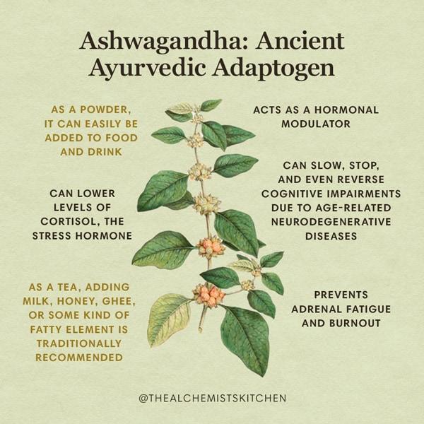 Ashwagandha Herb Benefits Infographic
