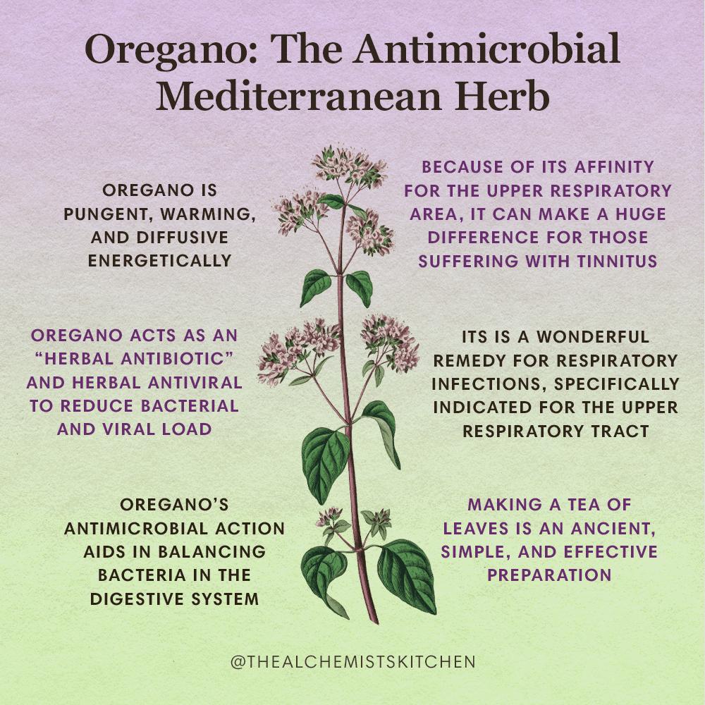 Oregano Herb Infographic