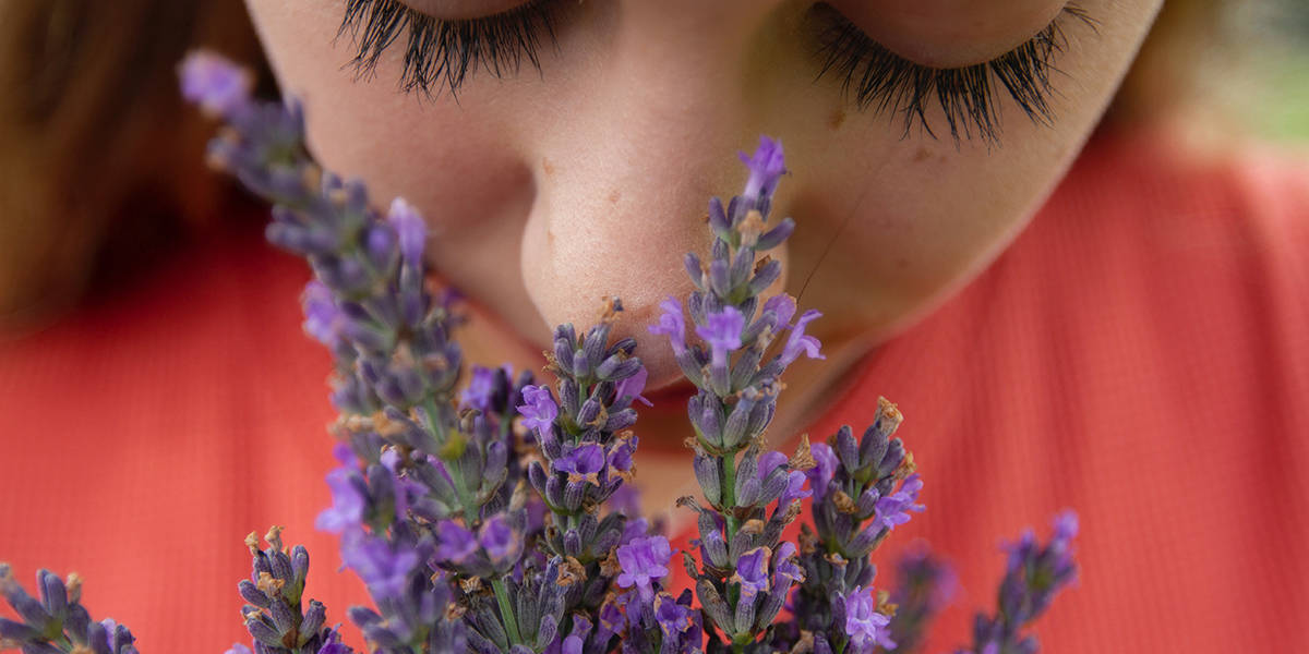 """The Sense of Smell: An Entrance to Another Dimension of """"Reality"""""""