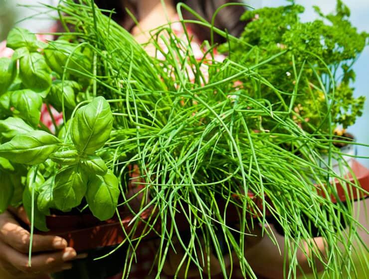Women Holding Herbs For Heart
