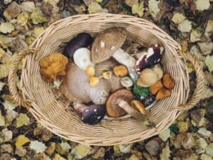 Mushrooms in a basket that can help with immunity boosting.