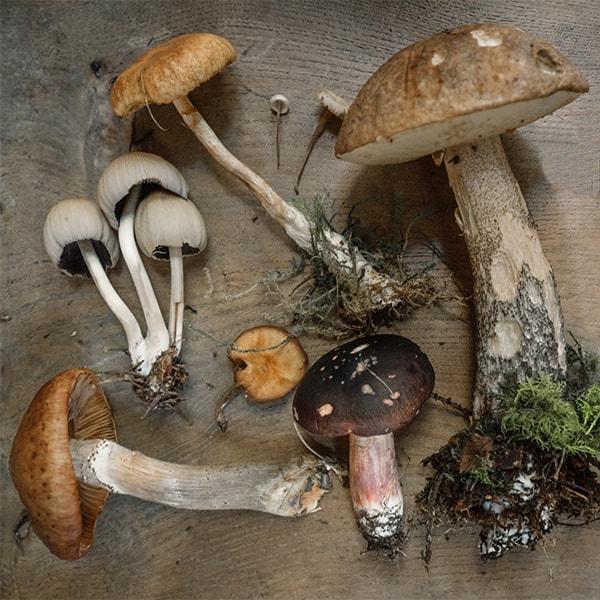 Medicinal Mushrooms as Food Medicine