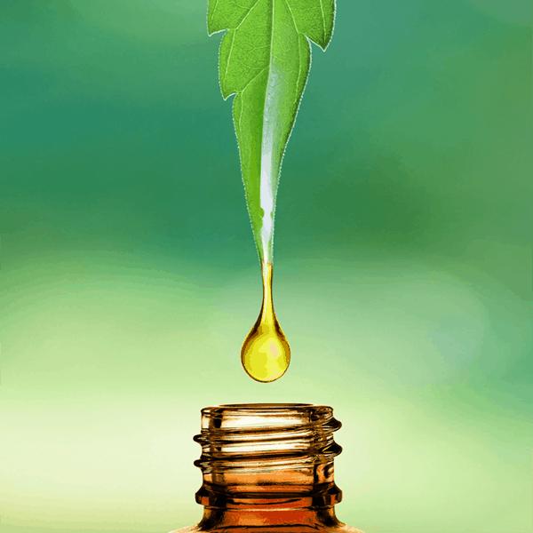 Discovering CBD Oil for Plant-Based Wellness