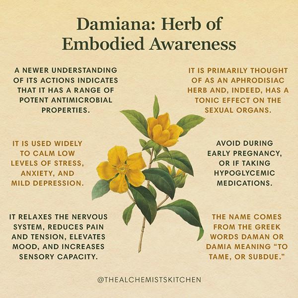 Damiana Infographic