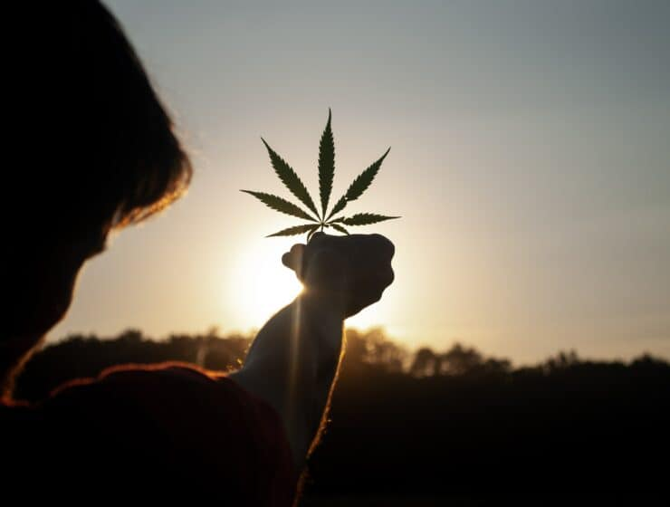 A man holding a cannabis leaf.