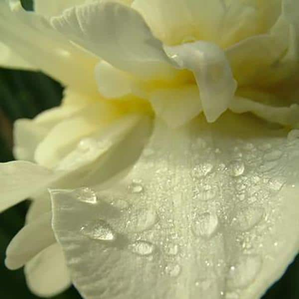 DIY Hydrosols: How To Make Flower Water at Home