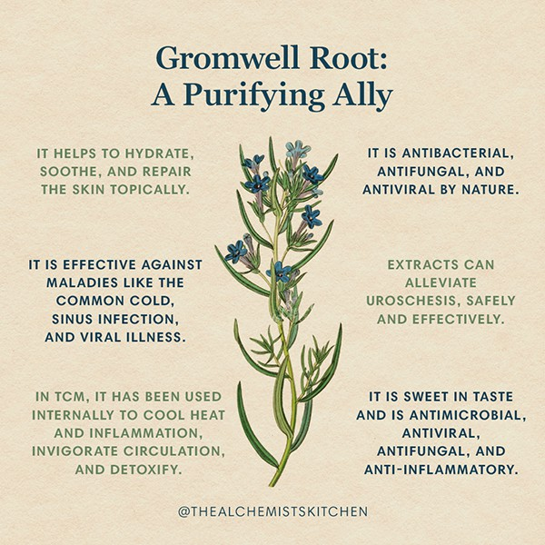 Gromwell Root Infographic
