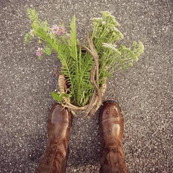 Go Wild: Three Benefits of Foraging & Making Wild Plant Medicines
