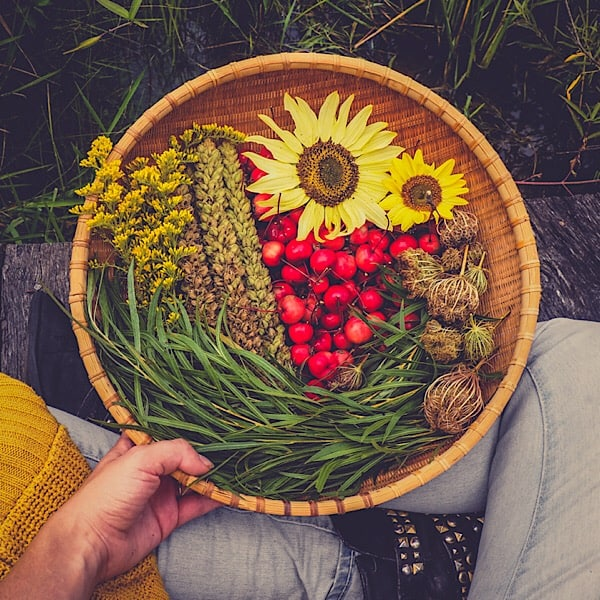 Foraging in the Woods: What to Look for this Fall