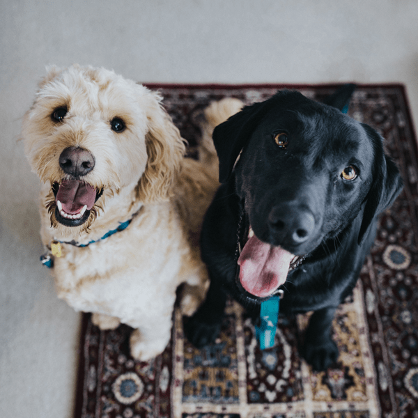 CBD is for Cats and Dogs Too
