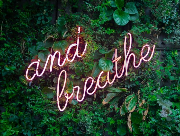 Eco-Wellness: How to Connect with Nature | The Alchemist Kitchen