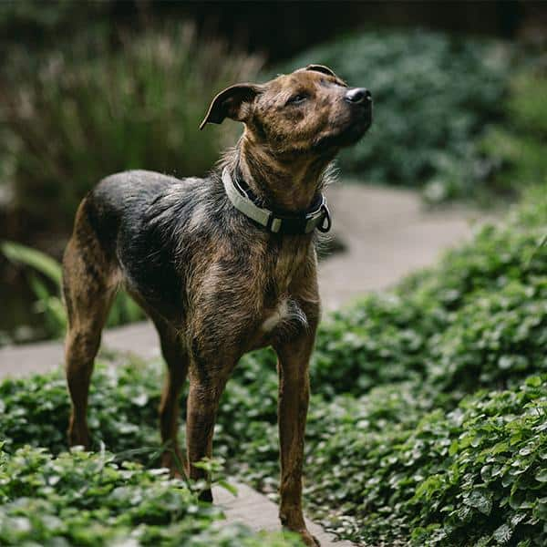 CBD Oil for Dogs & Other Furry Friends