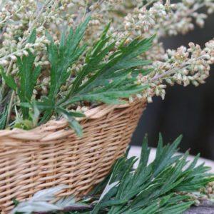 Mugwort in a basket