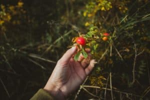 Rosehips and a hand.