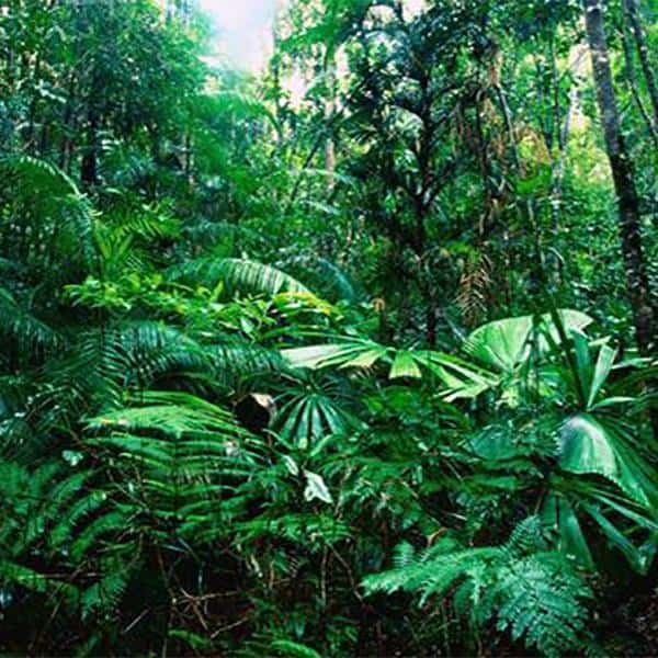 Importing Healing Herbs from the Jungle