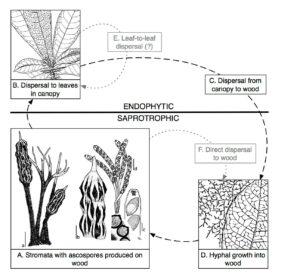 Viaphyte Life Cycle